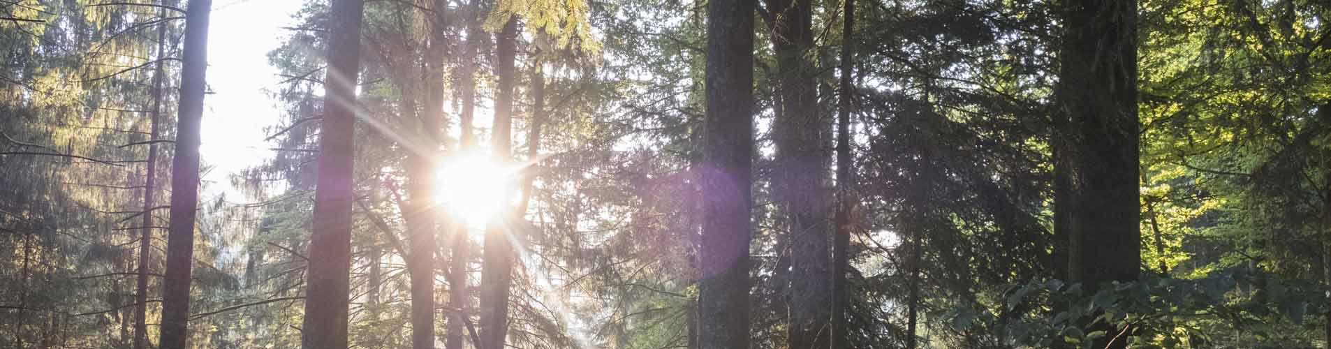 Sonne-durch-Bäume